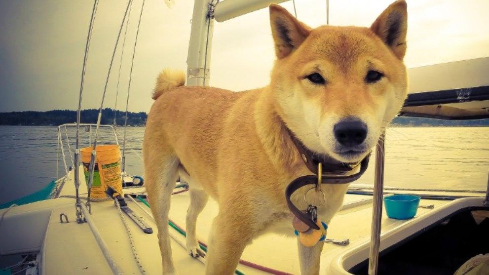 viajar perro barco - Consejos para viajar con perro y disfrutar al máximo