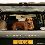 vivjar perro coche 150x150 - Cómo llevar a un perro en el coche: consejos y recomendaciones