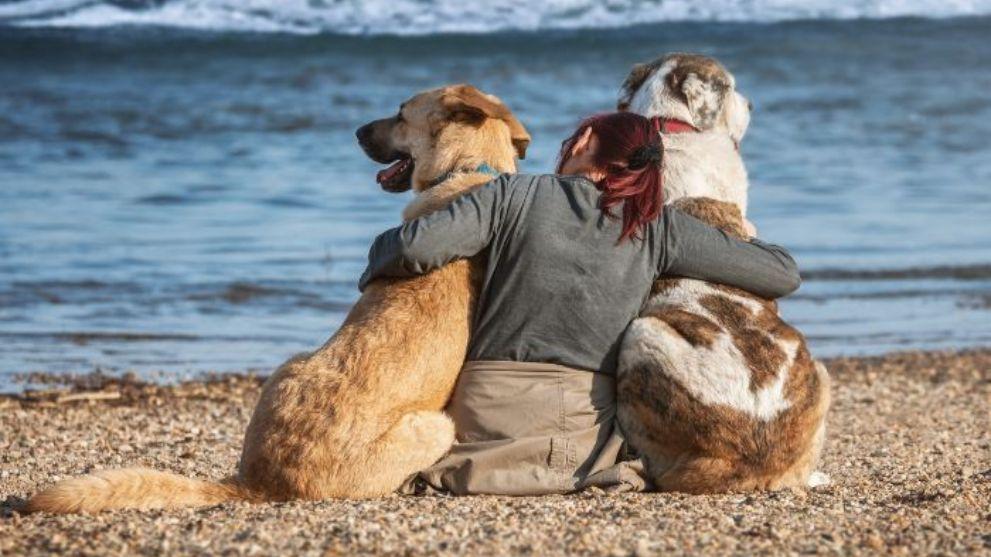 adoptar segundo perro 1 - Cuándo tener otro perro: Busca el momento perfecto