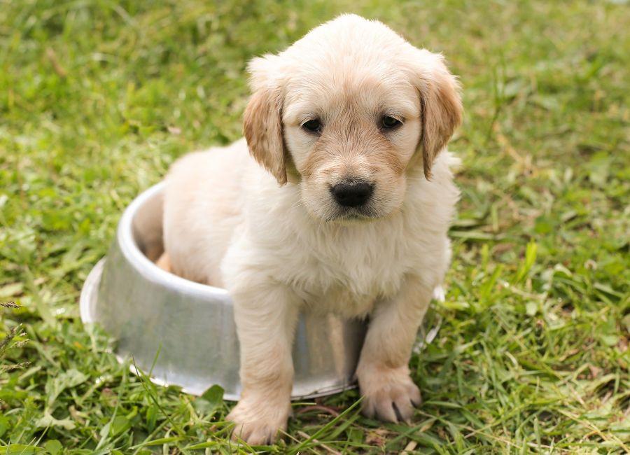 alimentar cachorro - Descubre qué te quiere decir tu perro cuando mueve la cola