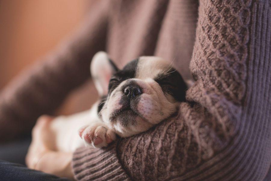 cuanto dura celo perra - Cómo actuar frente a un perro con ansiedad