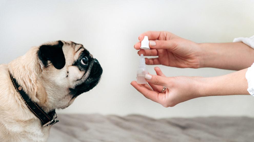 limpiar ojos perro - Cómo cuidar los ojos de tu perro: Paso a Paso