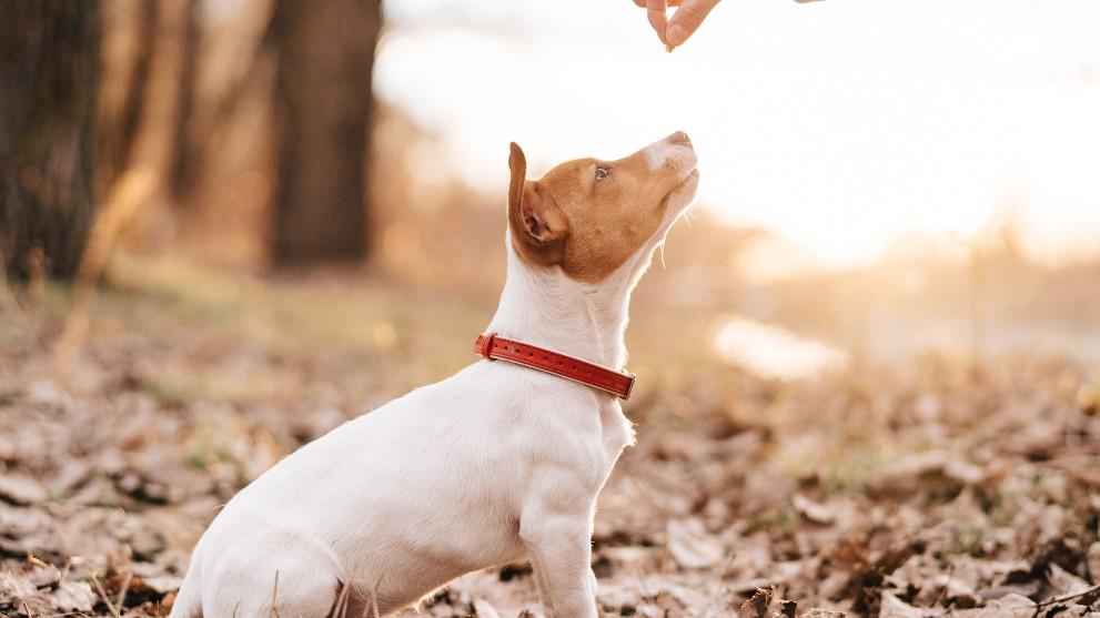 adiestramiento canino positivo - Las técnicas de adiestramiento canino más efectivas