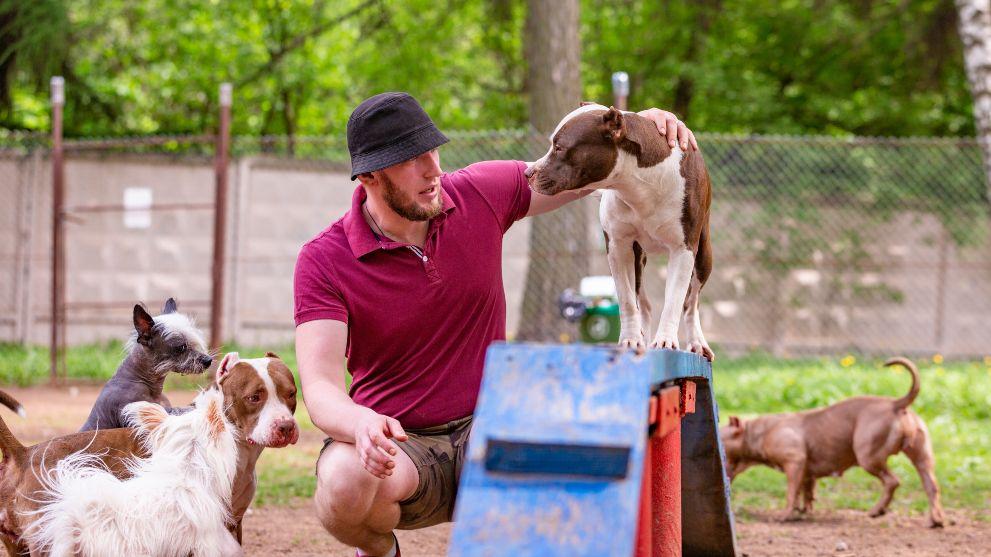 metodos adiestrar perros - Las técnicas de adiestramiento canino más efectivas