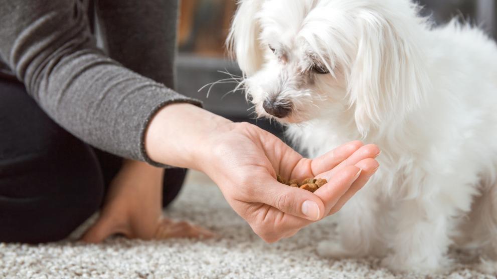 perro no come - Por qué tu perro ha perdido el apetito