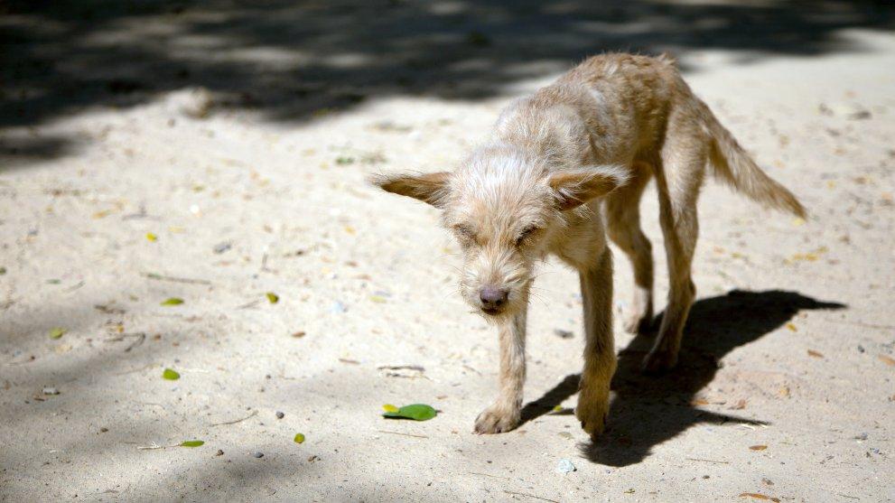 perros que mas se abandonan - Las 9 razas de perros que sufren más abandonos