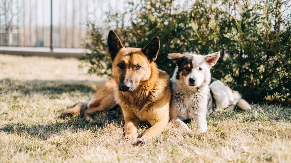 razas perro mas abandonadas - ¿Los perros pasan frío en invierno?