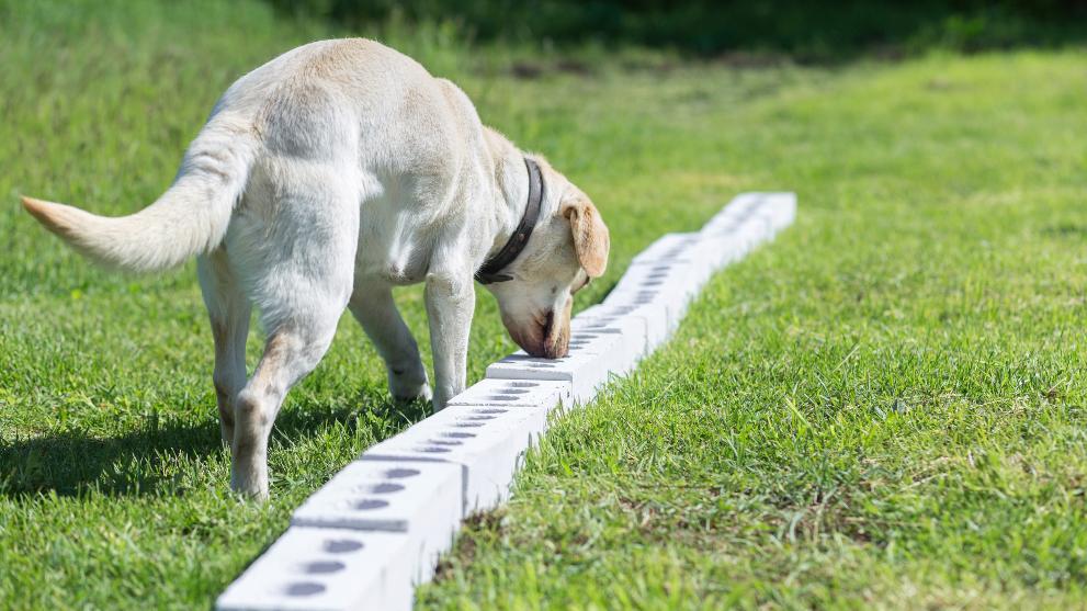 Técnicas de adiestramiento canino