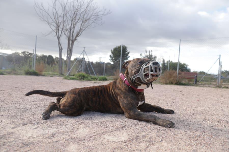 IMG 9425 - Refugio Animales Paterna