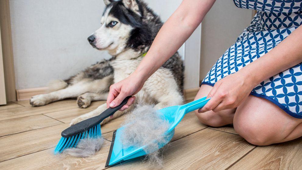 caida pelo perros - Perros potencialmente peligrosos. Guía de Razas de perros