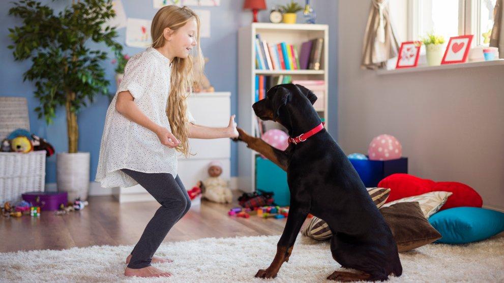 comida diversion perros - Trucos para que tu perro coma pienso