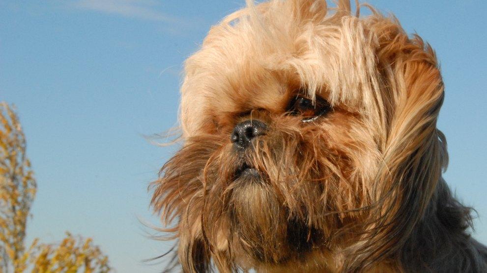 perro vivir piso - Perros ideales para vivir en pisos