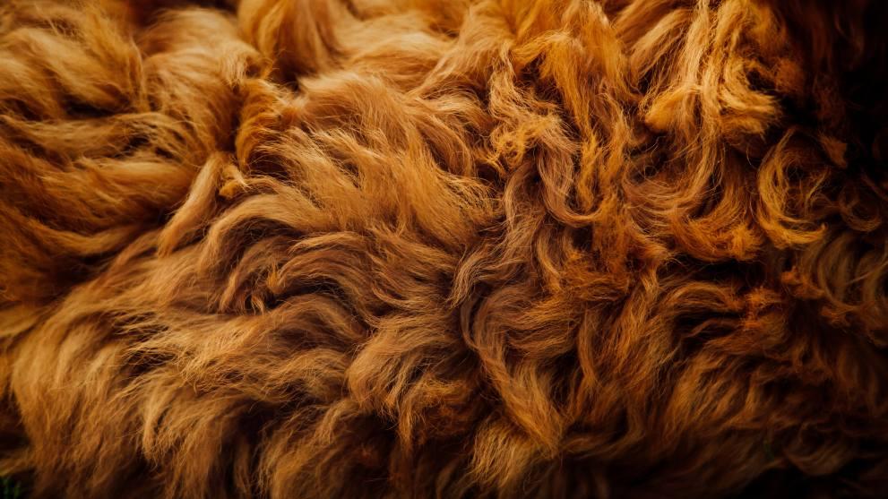 prevenir caida pelo perro - ¿Por qué se le cae el pelo a tu perro?