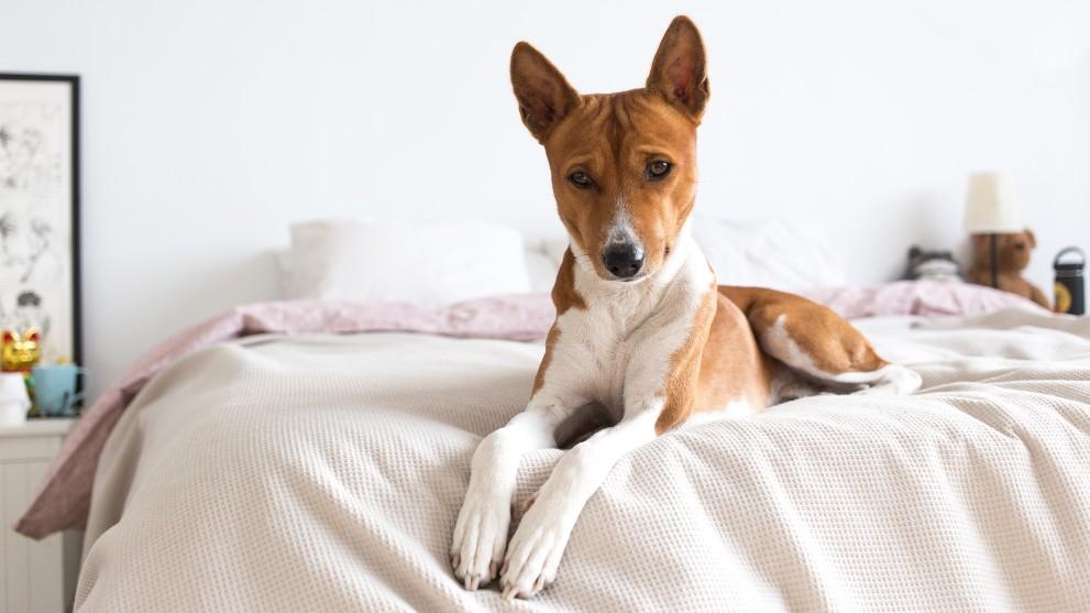 raza perro vivir pisos - Perros ideales para vivir en pisos