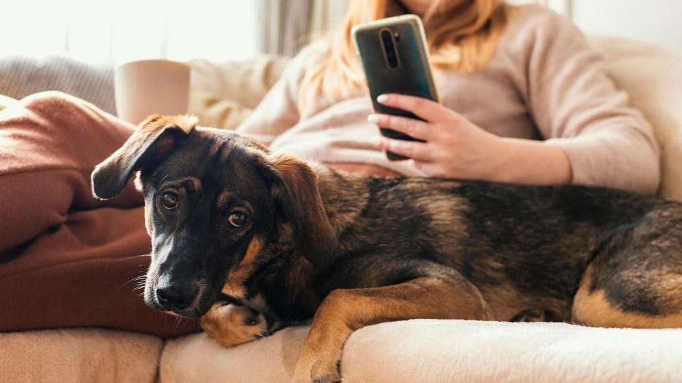 vivir piso perro mestizo - Blog de perros para buenos dueños