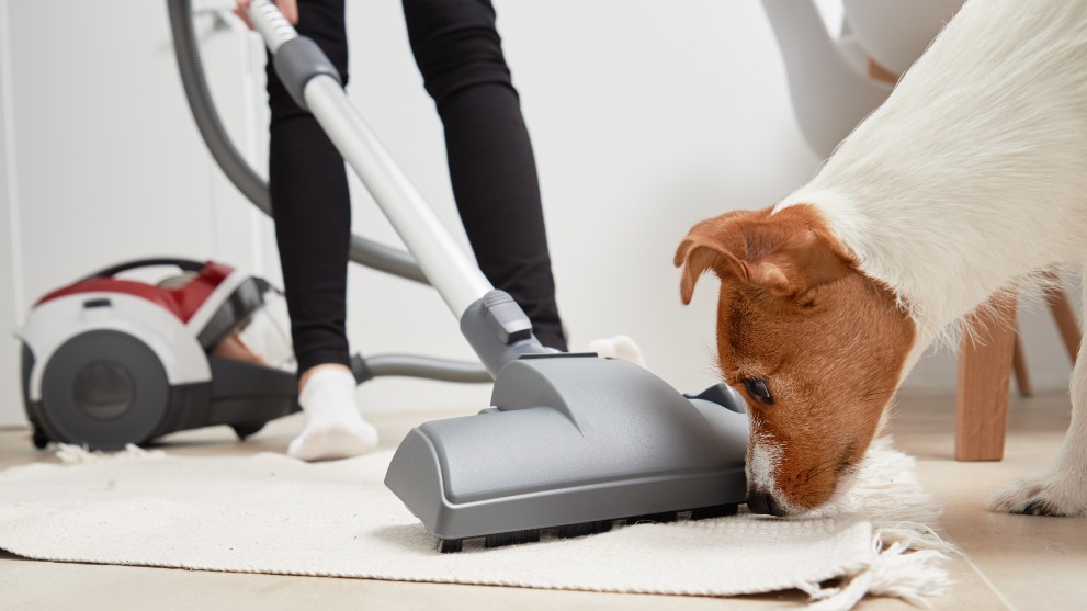 Cómo limpiar bien la casa con un perro