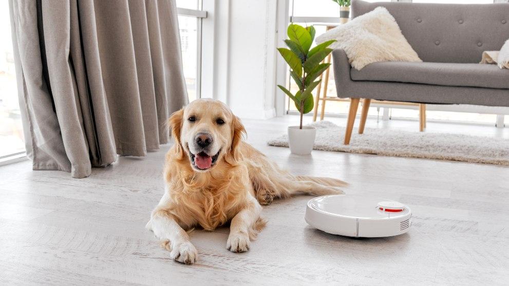 mantener casa limpia teniendo perro - Cómo limpiar tu casa cuando tienes un perro
