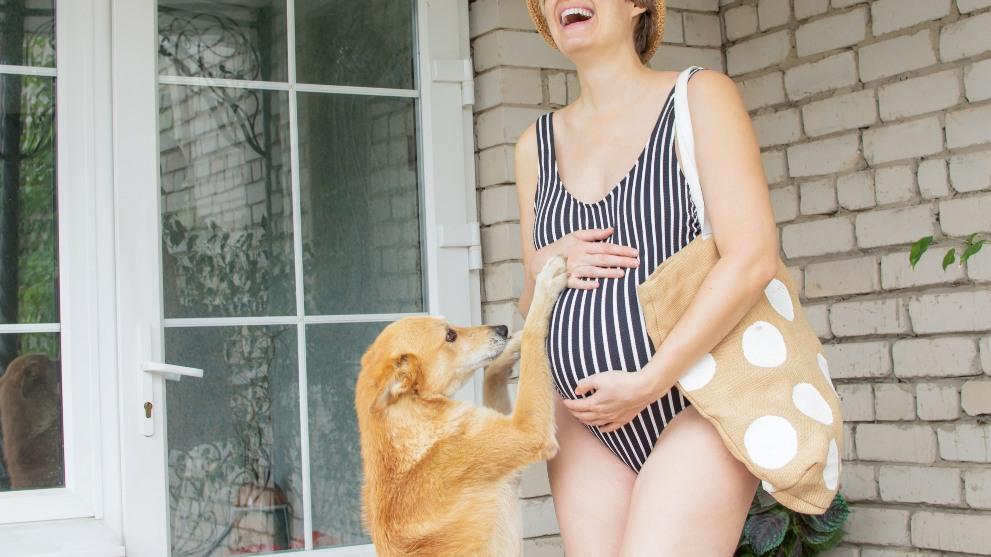 perro con duena embarazada - Cómo se comportan los perros con las embarazadas