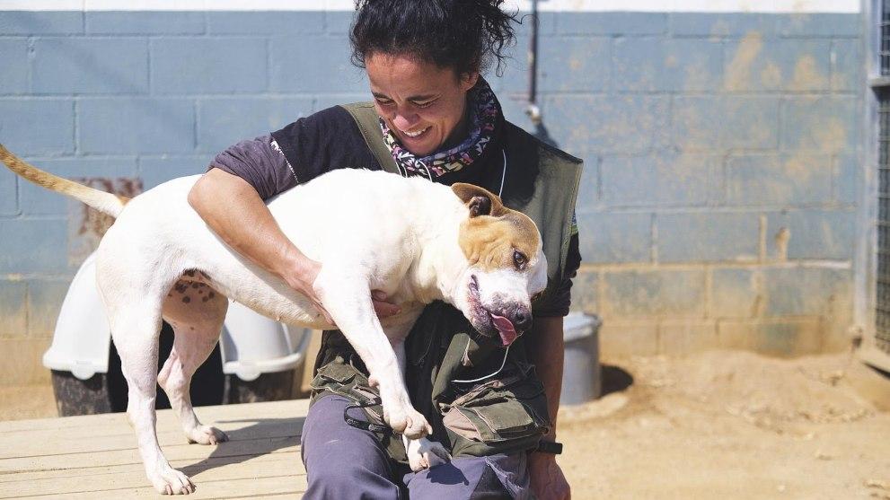sociedad protectora animales mataro - Garrapatas en perros: aprende a deshacerte de ellas