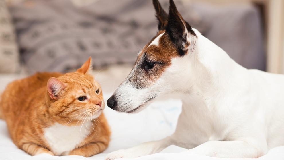 Convivencia entre perros y gatos - La convivencia entre perros y gatos