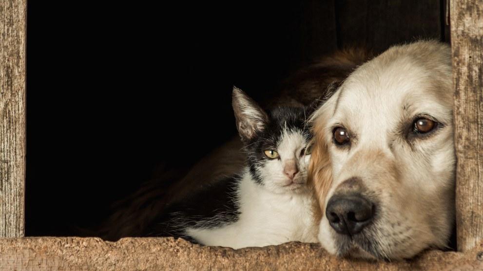 Perro y gato juntos en la ventana