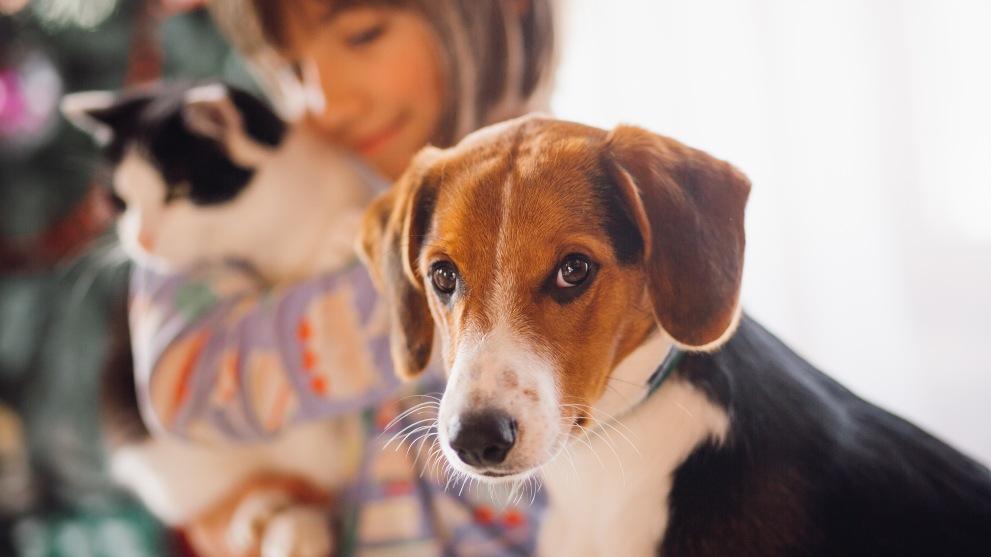 Perros y gatos juntos - La convivencia entre perros y gatos