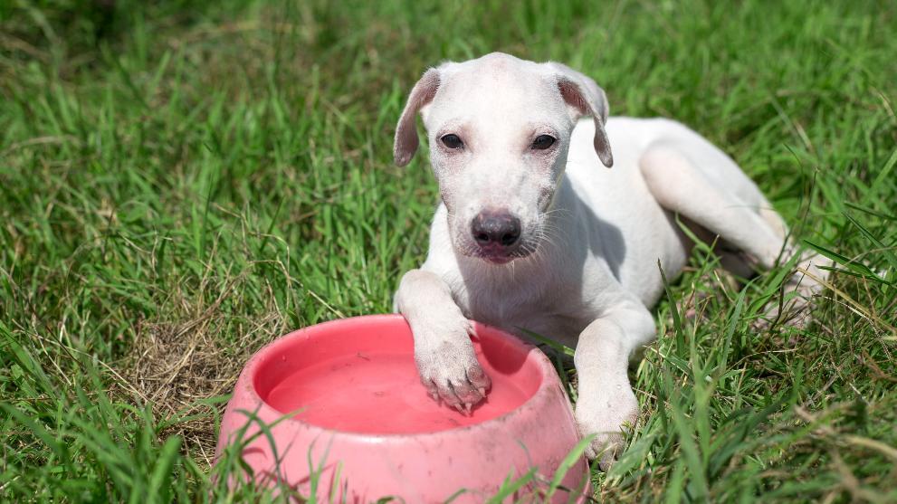 dog animal breed mammal outdoors pet canine 1 - ▷ ¿Por Qué mi Perro Come tan Rápido y con Ansiedad?