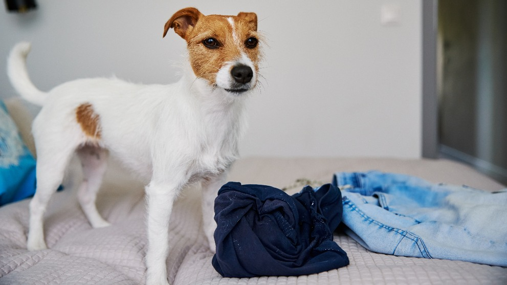 Cómo controlar que tu perro no sea agresivo - Cómo controlar que tu perro no sea agresivo